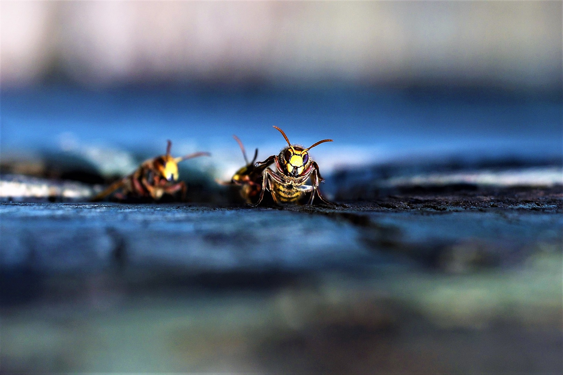 Insekten - Wespen - Fliegen - Mücken | Fliegengitter für Fenster & Türen nach Maß | www.fliegengittermacher.de